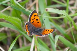 small copper_2